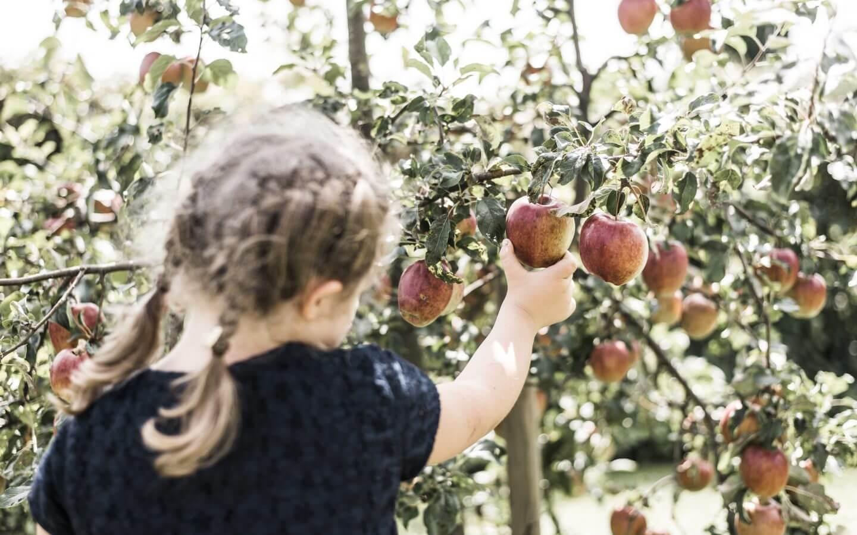 Apfelernte im Apfelland - Ballonhotel Thaller